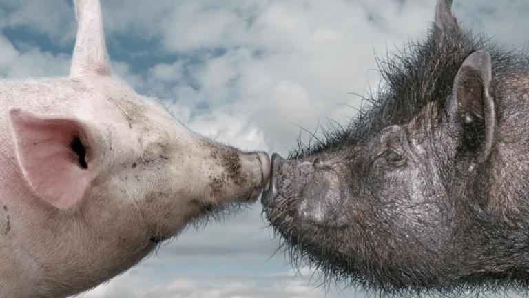 image combien de microbes lors d'un baiser