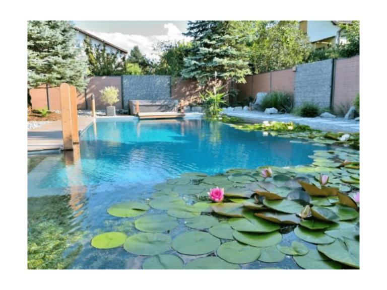 piscine naturelle avec nénuphars et lotus
